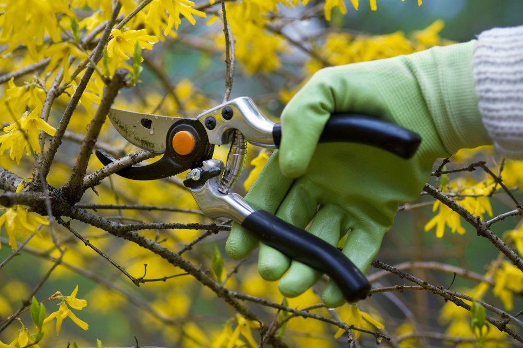 man cutting a twig