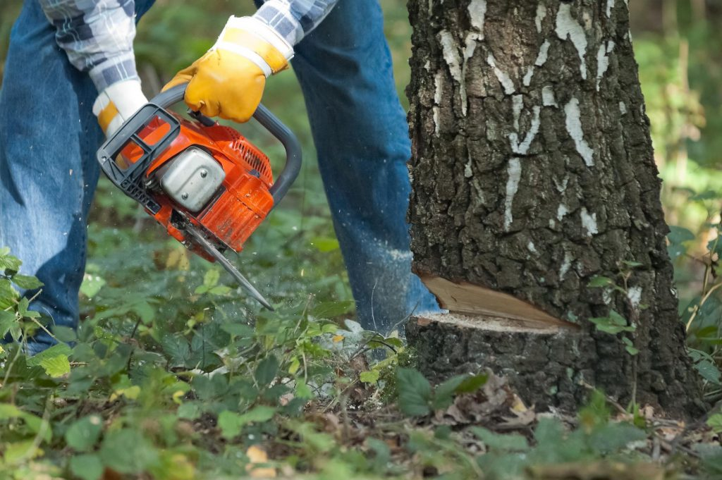 man cutting a big tree