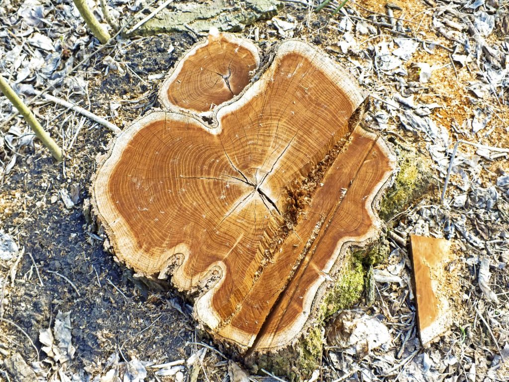 tree stumps for removal