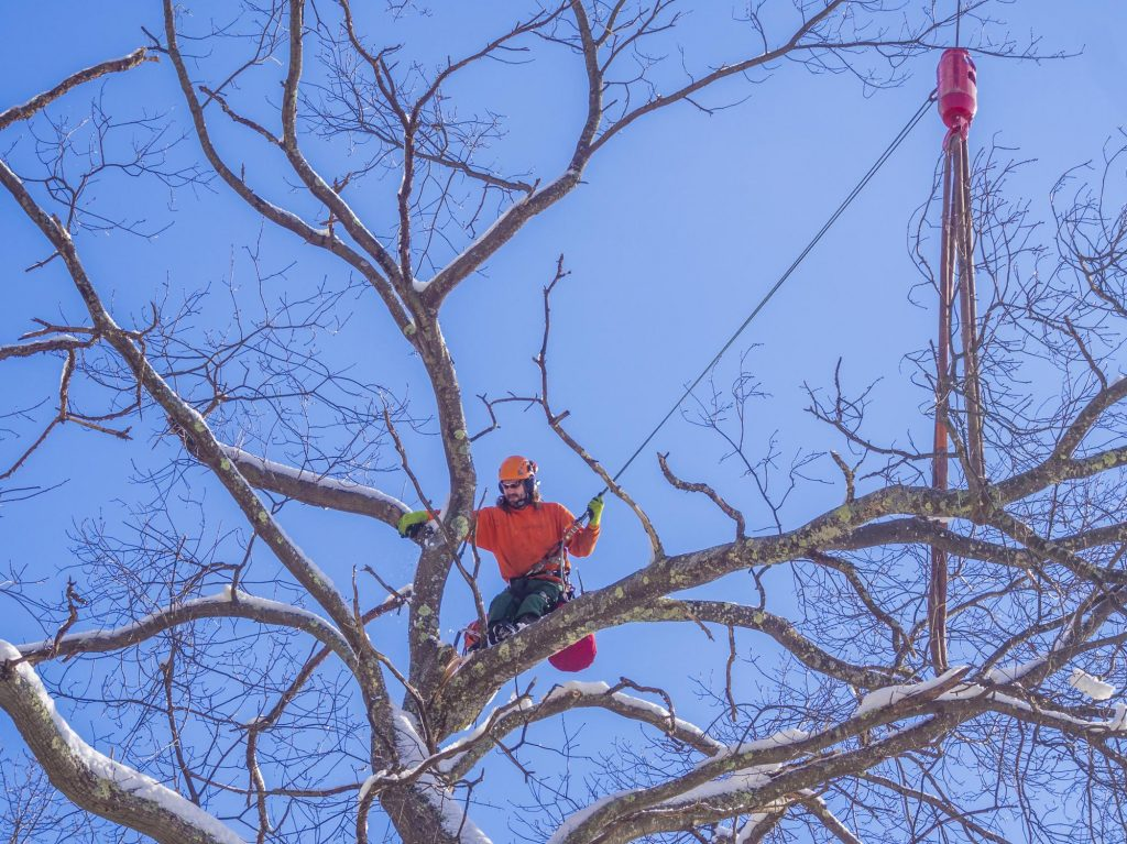 man is on the tree
